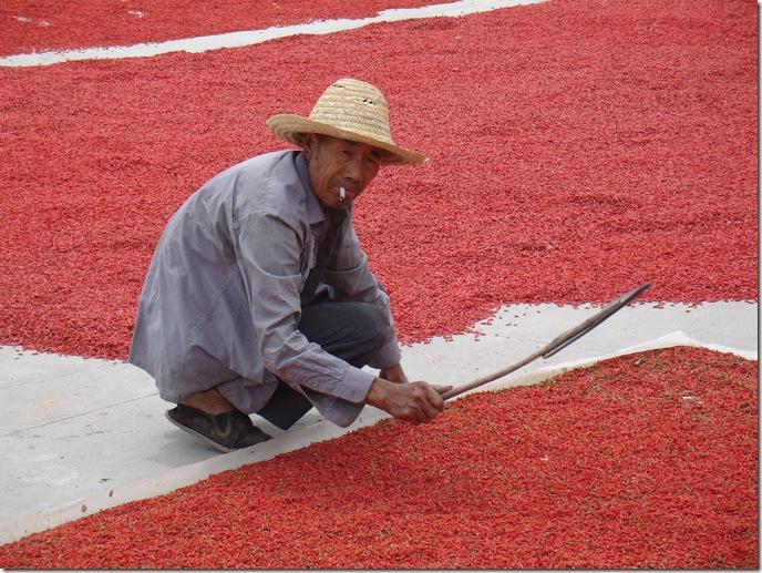 ягоды годжи выращивание