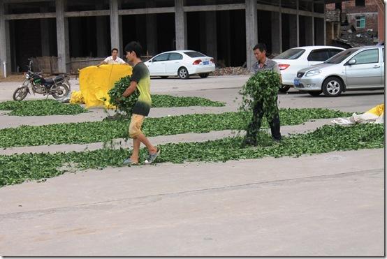 Те Гуань Инь на улицах Китая